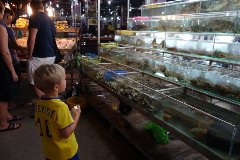 Hugo spanar in alla fiskar och skaldjur som hölls levande i akvarier innan det var dags att äta dom.