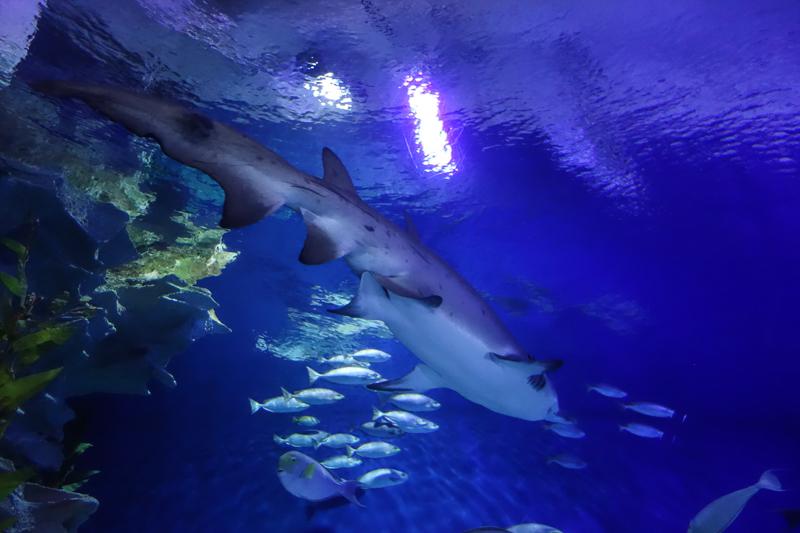 Tänk att vi fick klappa riktiga hajar på Aquaria.